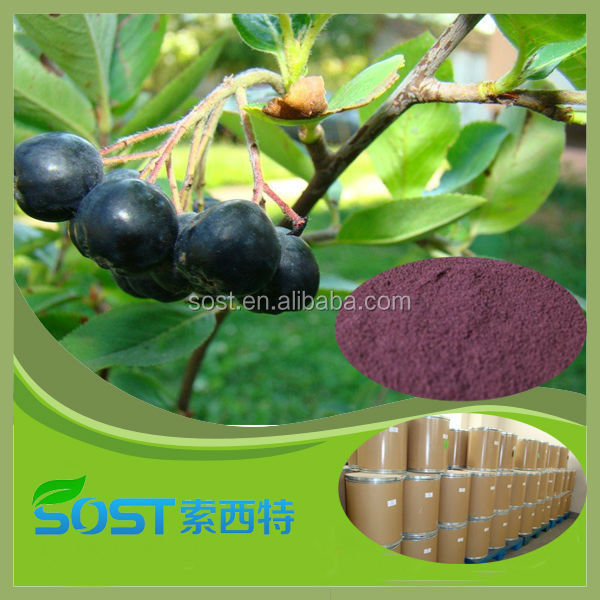 High Quality Acai Berry Extract acai berry powder