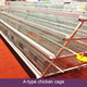 chicken brooder cage/ladder type chicken cage/chicken wire cage rock wall