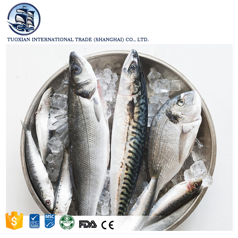 Species of freshwater fish mackerel nutrition