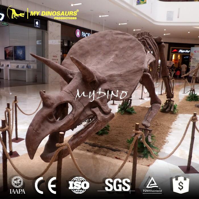 Mi-dino Escala Modelo En Venta De Esqueleto De Dinosaurio Fósil ...