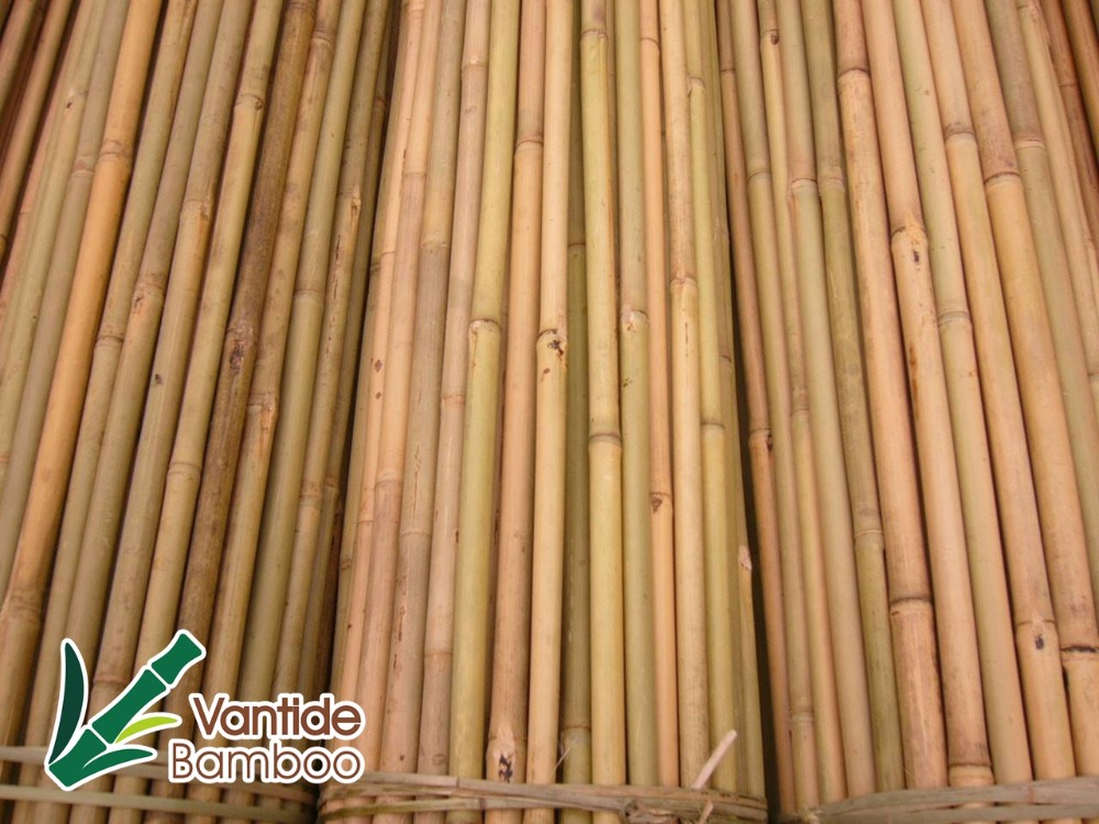 High Quality Natural Bamboo Pole Cane Sticks for Vineyard