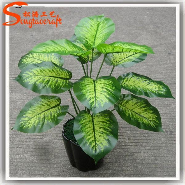 Nomi di piante vasi per le piante di plastica piante for Nomi piante da giardino