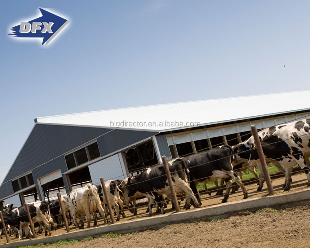 Large Scale Economical Steel Structure Cow Farm Shed