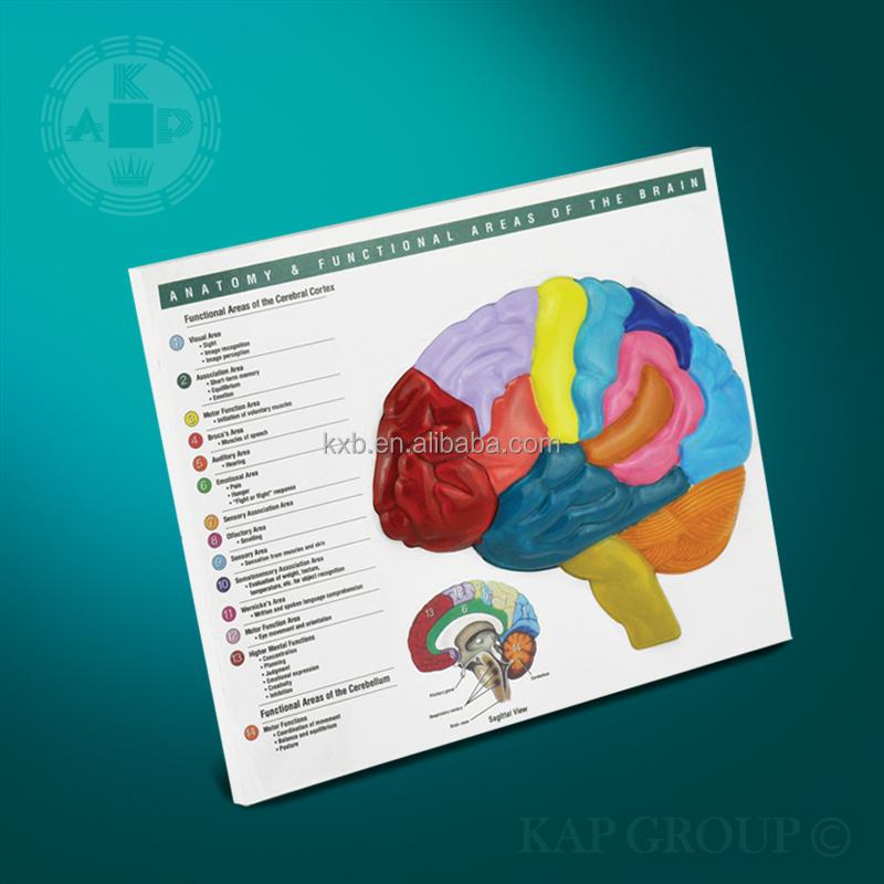 A08-008 Human Brain Puzzle / The Brain Anatomy - Buy The Brain ...