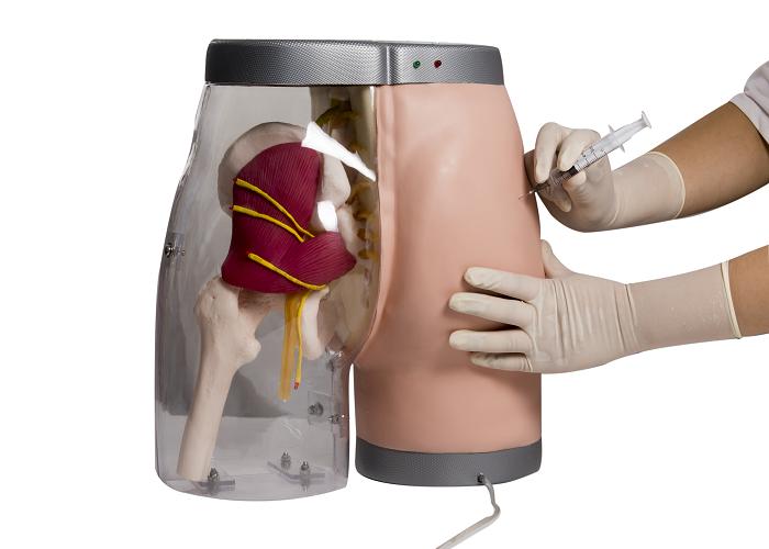 Gd/hs10b General Doctor Buttocks Intramuscular Injection  Simulator(injection Simulator,Medical Model) - Buy Injection  Simulator,Buttocks