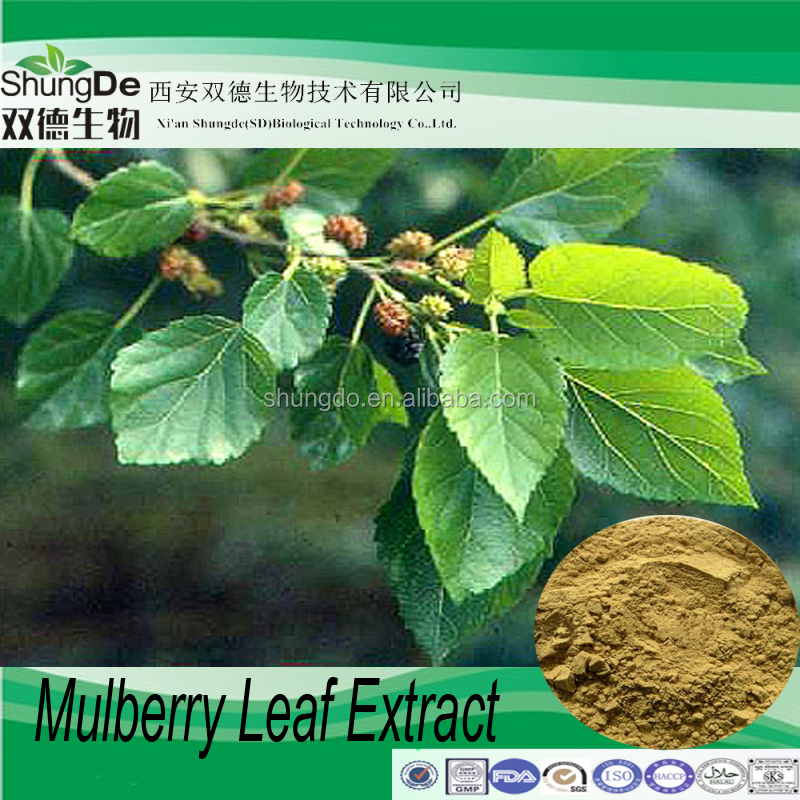 100% Natural Mulberry Leaf Extract powder/Mulberry P.E of mulberry leaves flavonoids