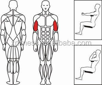 Fitness Equipment Biceps Curl Machine/ Gym Equipment Arm Curl ...