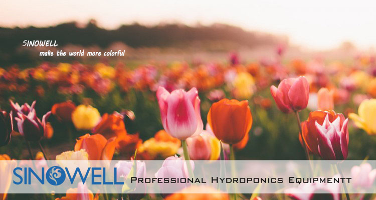 China Honest Manufacturer Sinowell Hydroponics 1000 Watt Double ...