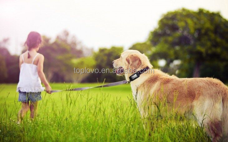 Waterproof Pet/ Cow Gps Tracker Made In China,Gps Dog Locator With ...
