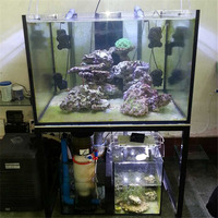 Fashionable clear view fish tank design for coral