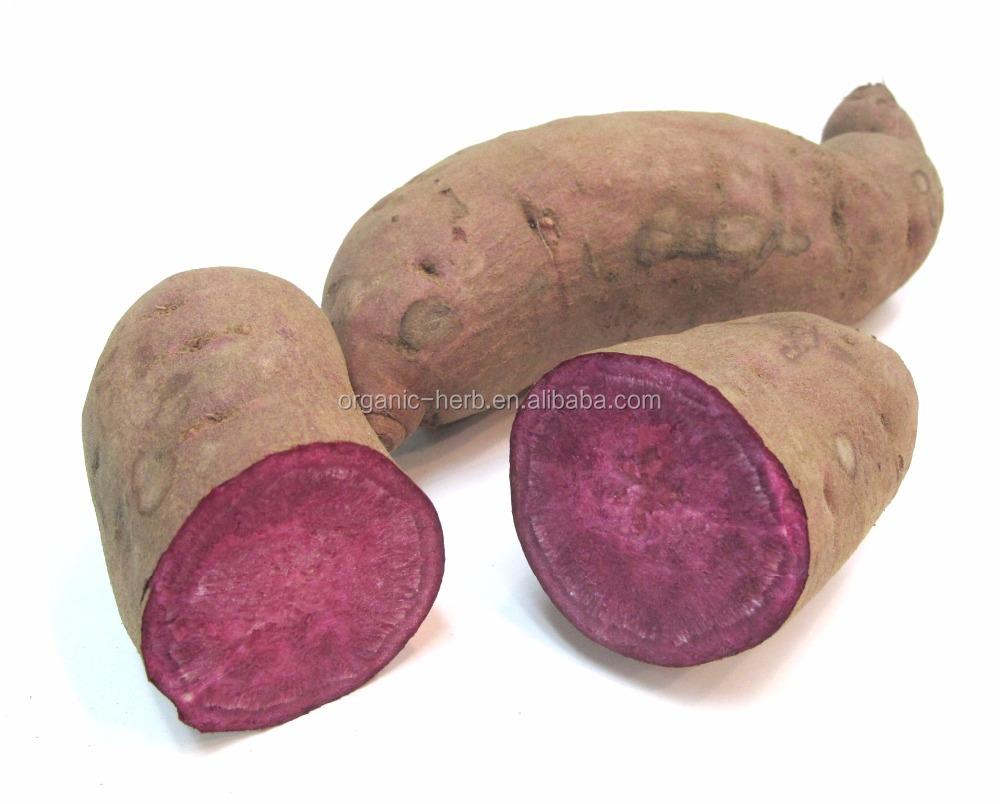 Sweet Sweet Potato Ekstrak Bubuk Manis Kentang Warna Ungu Ekstrak Ubi Dengan Harga Yang Baik Buy Sweet Sweet Bubuk Kentang Ekstrak Kentang Manis