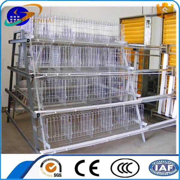 Farming Automatic Chicken Drinking and Feeding line system Poultry Equipment For Chicken Farm