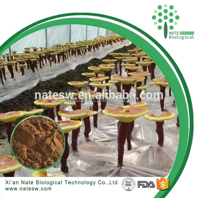 Herbal extract powder Reishi Mushroom extract 10% Ganoderma Lucidum polysaccharides