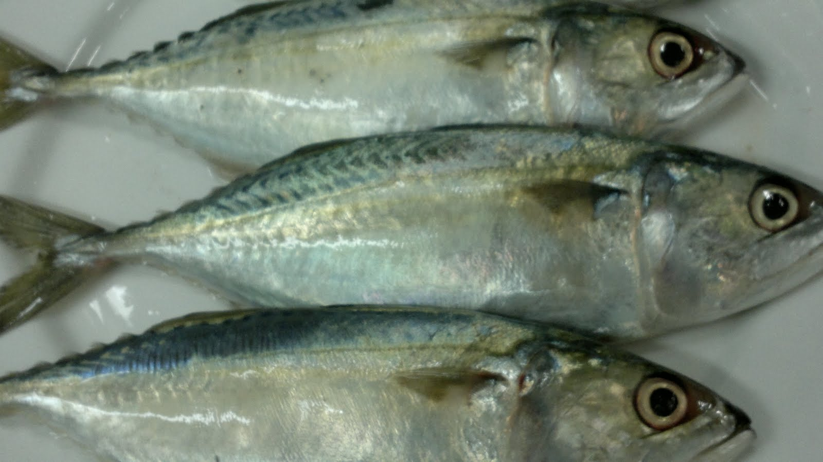 Pink Salmon Fish And Fillet - Buy Morocco Piece Frozen Fish Mackerel ...