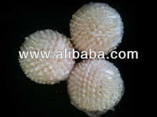 Shell Crafts White Palay Ball