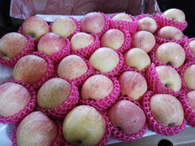 Fresh apple fruit wholesale distributors with high qulity fuji apple