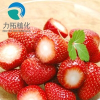 Hot Selling Strawberry juice concentrate powder