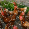 /product-detail/anping-hexagonal-wire-mesh-for-chicken-fence-60796523098.html