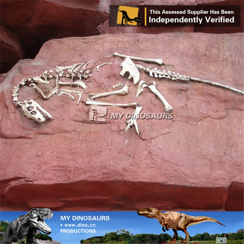 MY Dino-C005 Decorative dinosaur fossils specimen for museum
