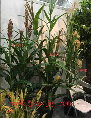 Hot selling artificial crops / Natural look decorative artificial corn plants / plastic artificial wheat grass for sale