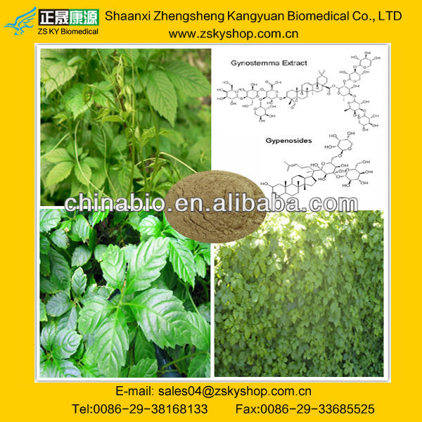 Gynostemma pentaphyllum Extract Gypenosides for Personal care