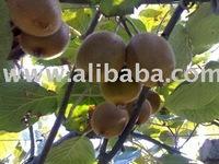 ~@ !!! growing kiwi fruit
