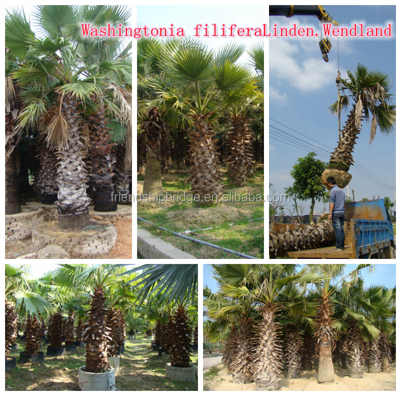 natural outdoor green decrotive ornamental landscaping palm trees plants