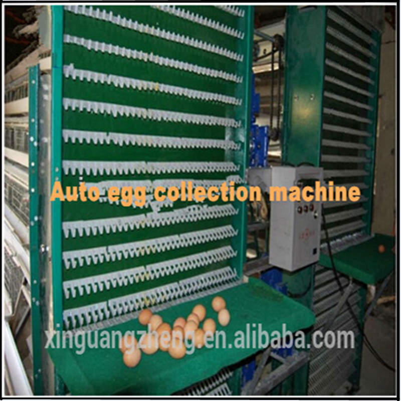 China Professional High Quality Layer Egg Chicken House
