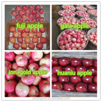 Chinese fuji Fresh Red Apple