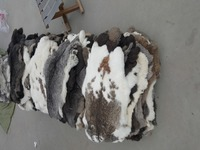Good quality rex Rabbit fur skin and rabbit skin for clothing