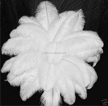 20-25 cm Kustom Massal Putih Ostrich Feather