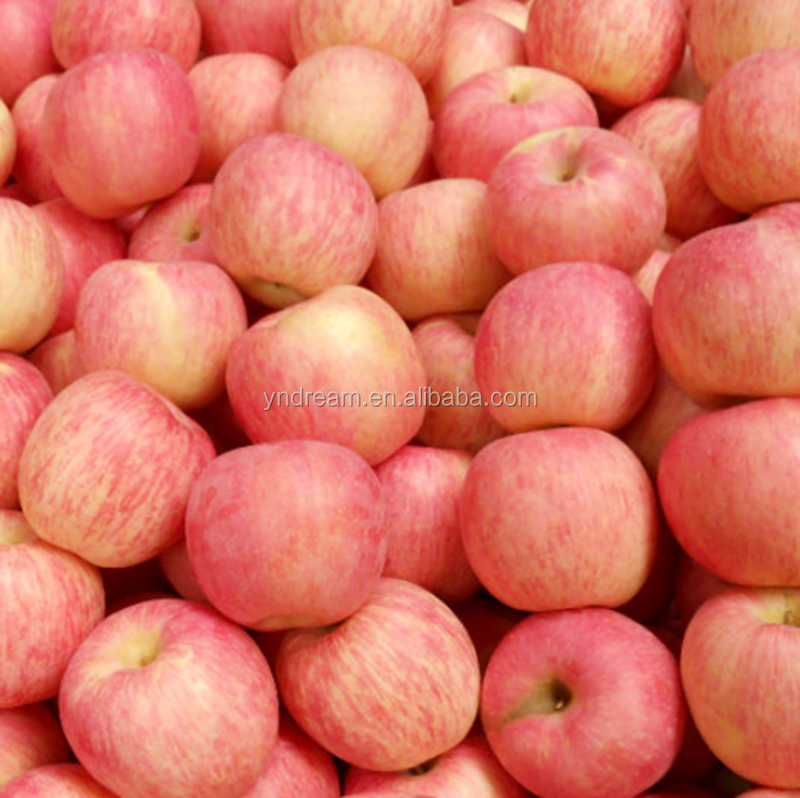 Red color fuji apple fresh style fruits for sale Fuji apple exporter in China