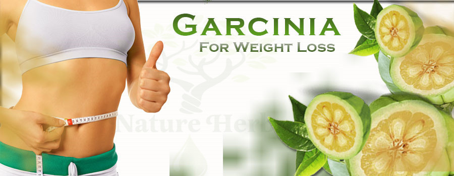 Garcinia Cambogia Fruit Peel Extract 50% 60% HCA/Hydroxycitric Acid