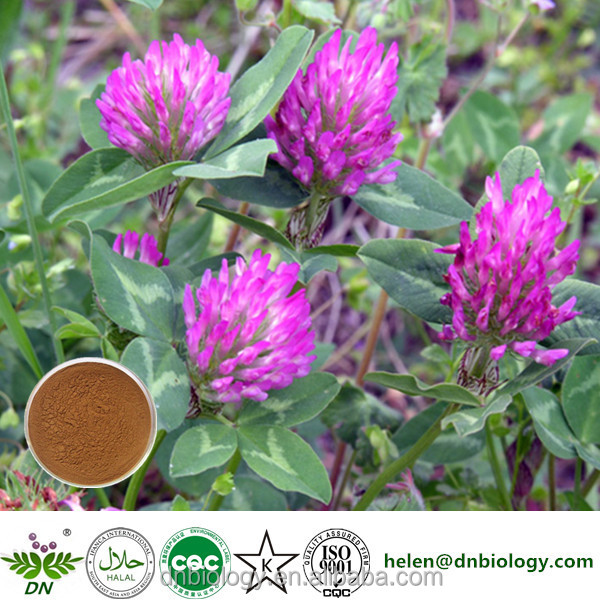 High Quality Natural Red Clover Flower Extract/ Red Clover extract/ Red Clover P.E.