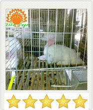 3 layer welded rabbit cage (direct factory)