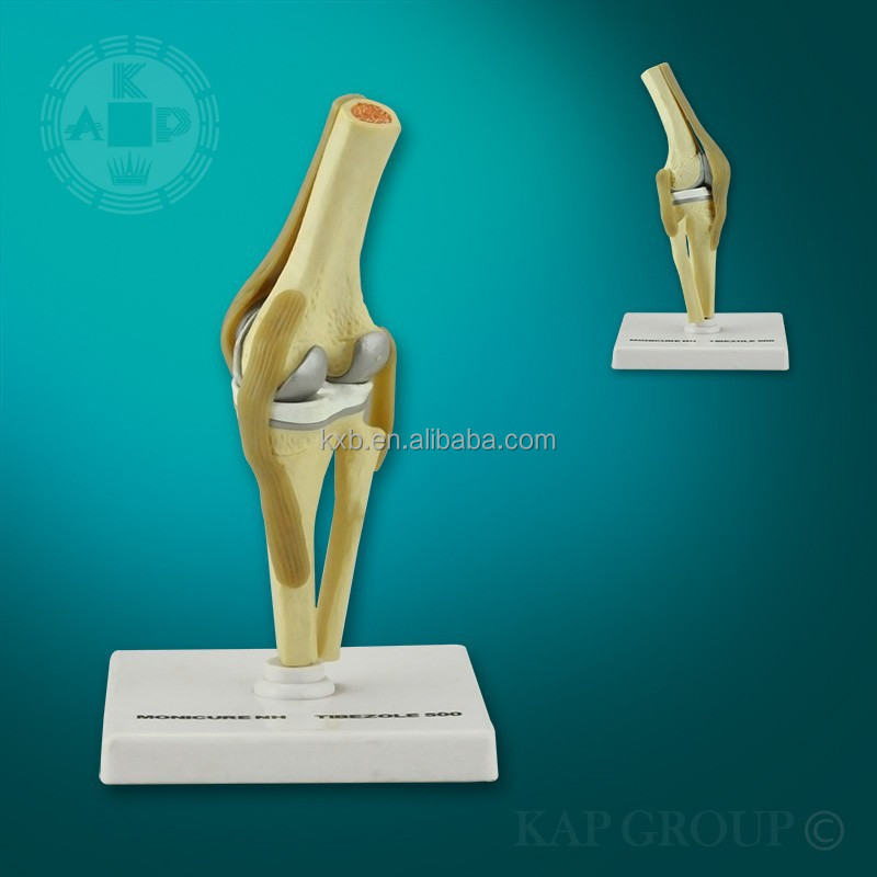 Real Human Knee Plastic Artificial Knee Joint Model Artificial Human ...