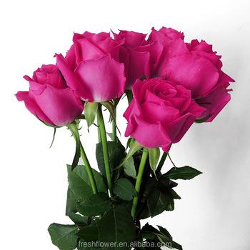 Hongri Grosir Potong Segar Bunga Mawar Rose Dalam Madu Peach Pink