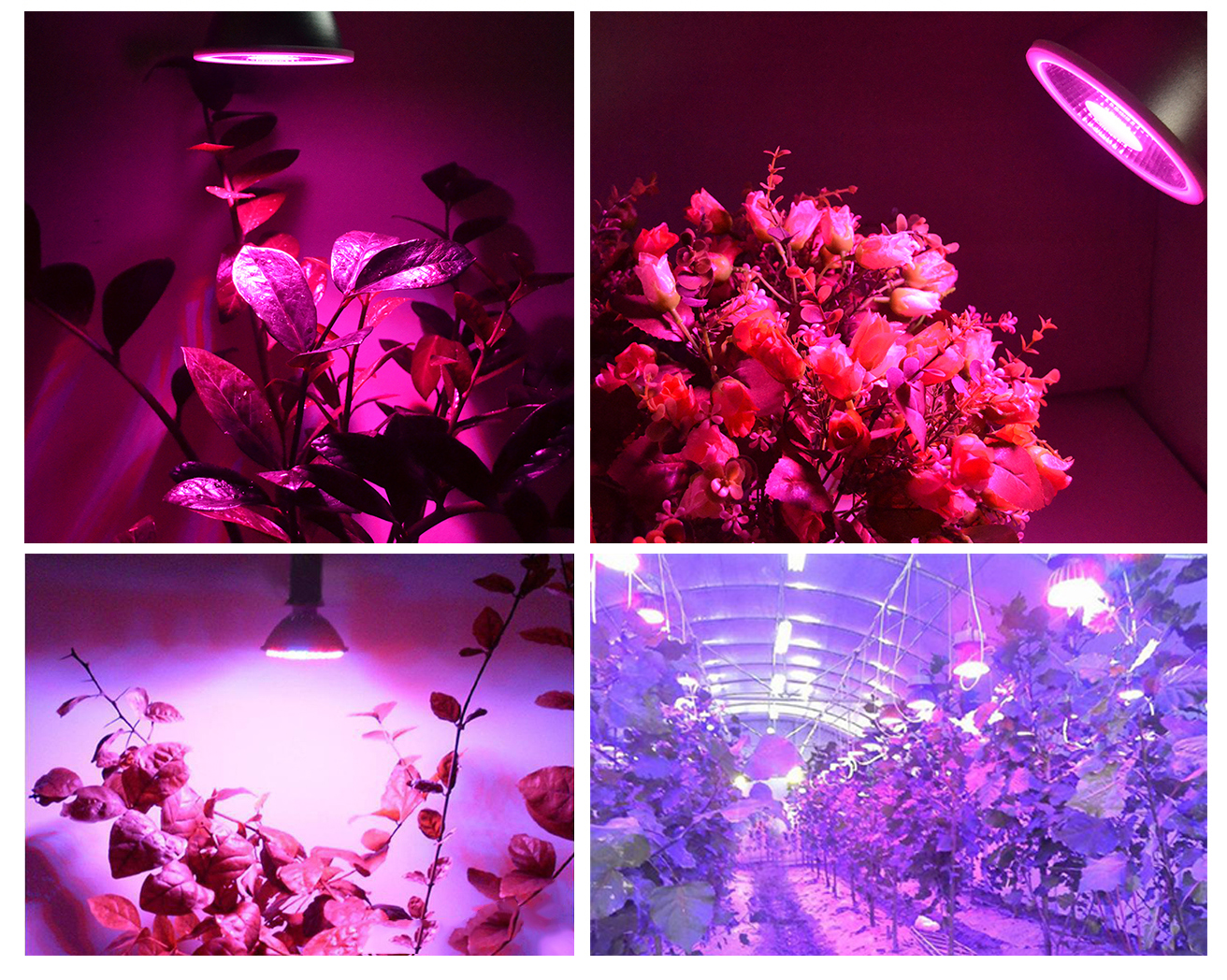PAR30 garden plants E27 15W grow led light for greenhouse par38 led