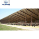 China prefab cow farm house steel structural prefabricated cowshed