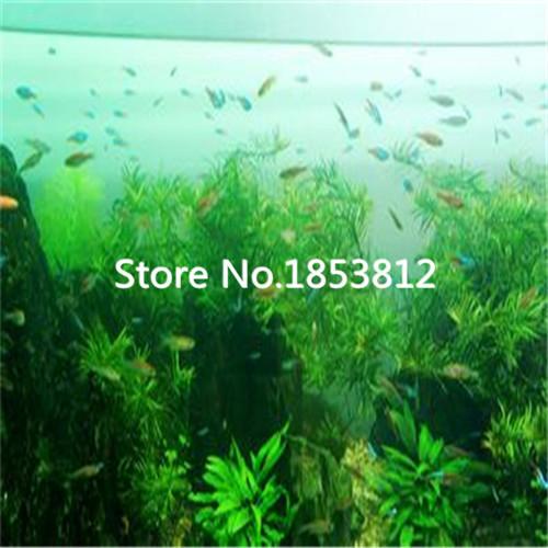 Pack Decoration Aquarium