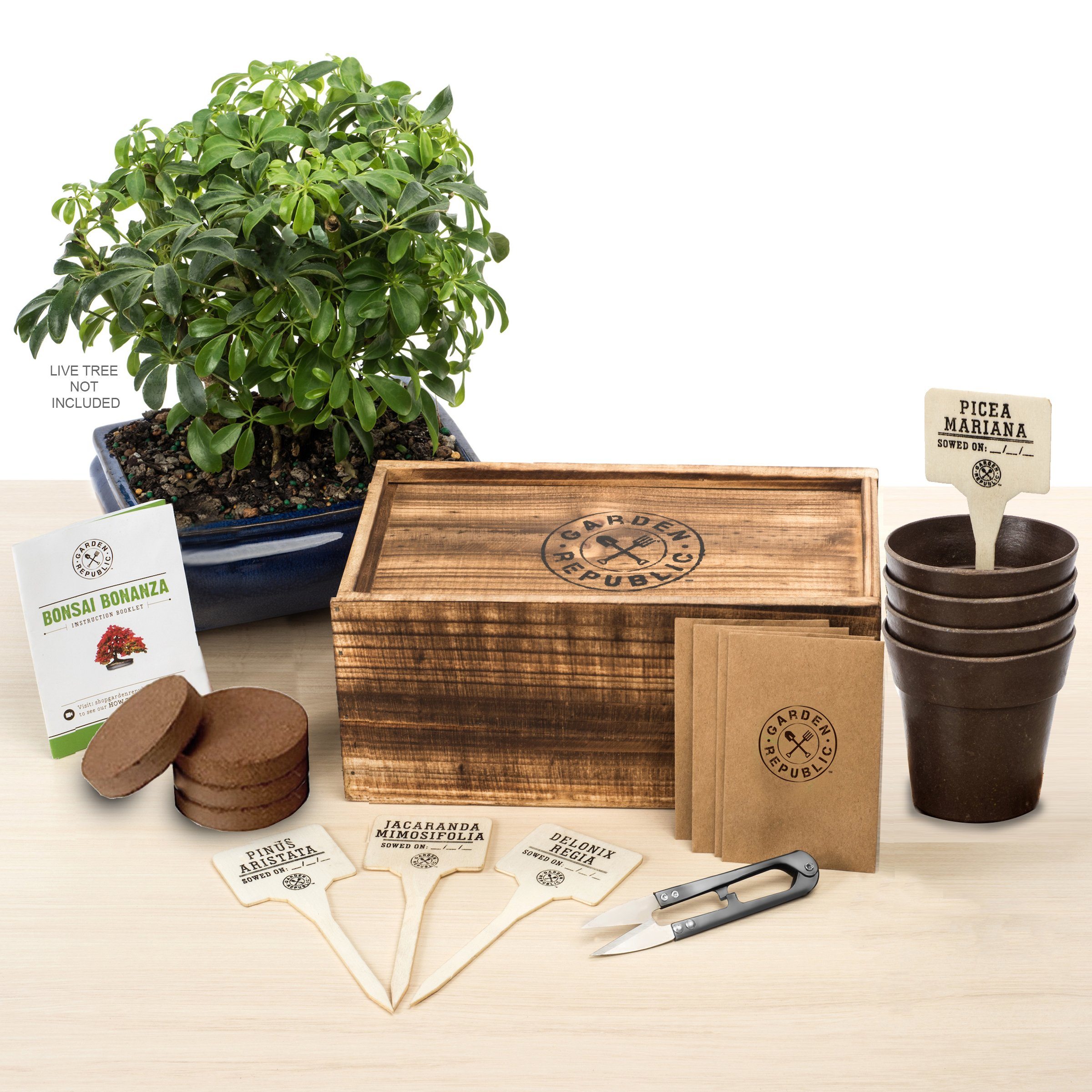 Buy Bonsai Tree Seed Starter Kit Mini Bonsai Plant Growing Kit 4 Types Of Seeds Potting Soil Recycled Bamboo Pots Pruning Shears Scissor Tool Plant Markers Wood Gift Box Ebook