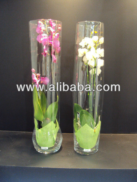Jarron con orquideas for Deco quoi mettre dans un grand vase