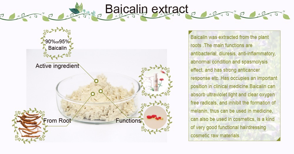 Factory Offer Low Price Natural Baicalin Extract 85% 90% 95% 98%
