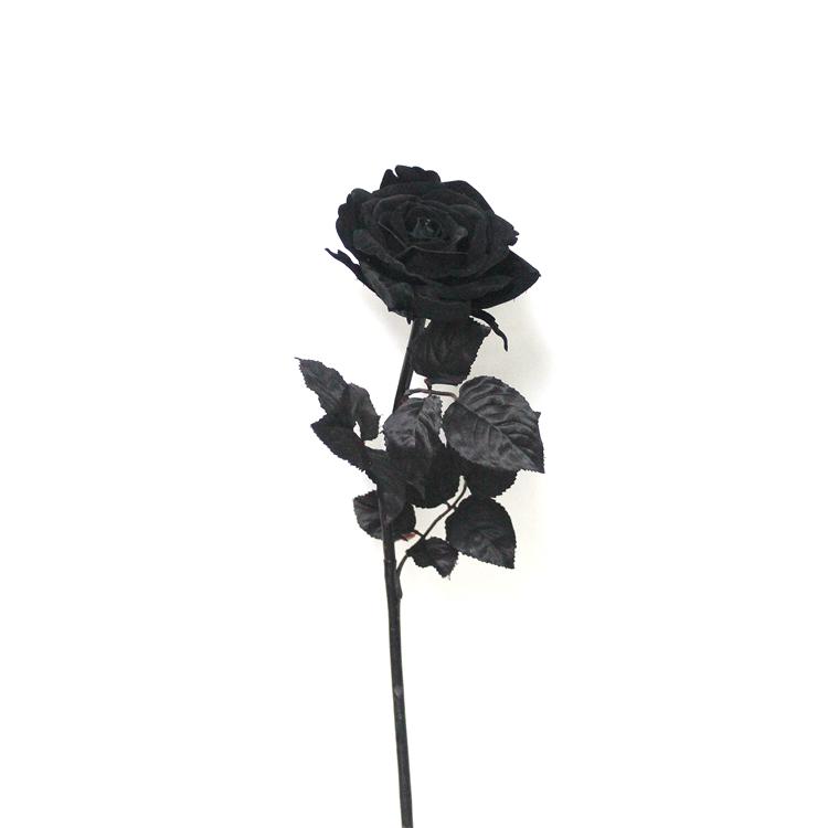 Download Gambar Bunga Mawar Hitam Keren Vina Gambar
