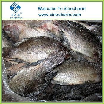 Chinese Tilapia Fish Price