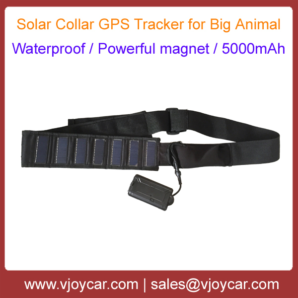 Solar Powered Collar Gps Tracker For Famer To Manage Big