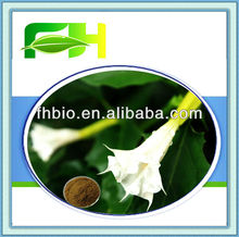 Spot Supply Natural Upright Datura Flower P.E.