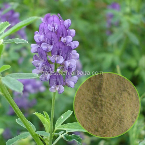 Alfalfa Extract / medicago sativa /CAS NO. 84082-36-0