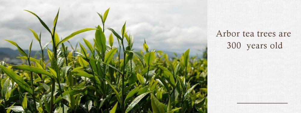 Wholesale CTC Pure Ceylon Yunnan Black Tea for Tea Bags - 4uTea | 4uTea.com