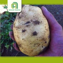 wholesale chinese potato with low price fresh japanese purple potatoes